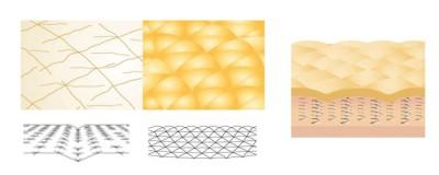 Krem Shiseido Bio-Performance Super Revitalizing Cream - opis działania - włókna elastyczne